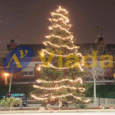Árboles Navidad espacio público
